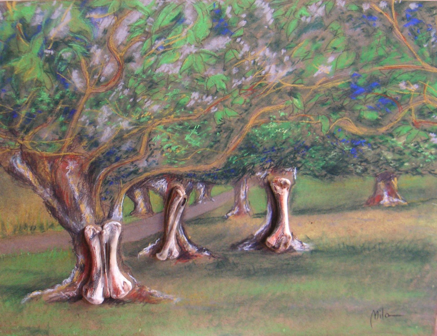 ARBOLES HUESUDOS – BONY TREES